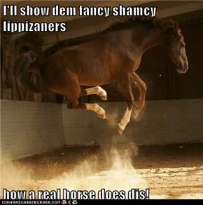 I'll show dem fancy shamcy lippizaners  how a real horse does dis!