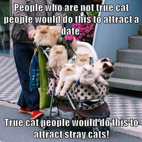 People who are not true cat people would do this to attract a date.  True cat people would do this to attract stray cats!