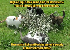 High on nip, it took some time for Mortimer to realise he was between two enemies.            Then again, Bob and Perkins weren't exactly at their sharpest either