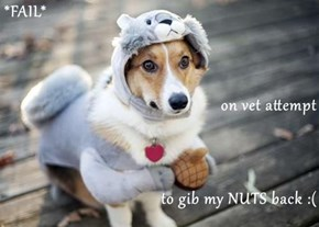*FAIL* on vet attempt to gib my NUTS back :(