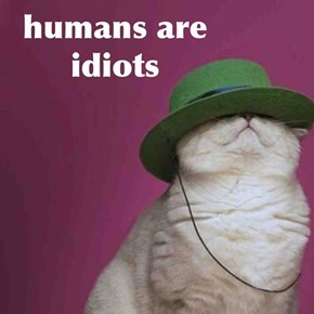 humans are idiots
