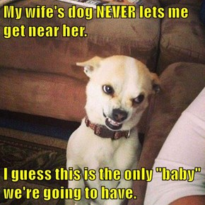"""My wife's dog NEVER lets me get near her.  I guess this is the only """"baby"""" we're going to have."""