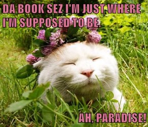 DA BOOK SEZ I'M JUST WHERE I'M SUPPOSED TO BE.  AH, PARADISE!