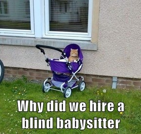 Why did we hire a blind babysitter