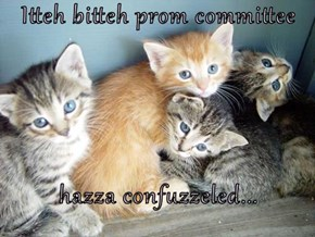 Itteh bitteh prom committee  hazza confuzzeled...