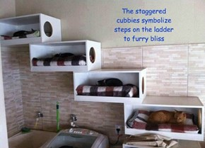 The staggered cubbies symbolize steps on the ladder to furry bliss