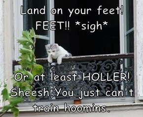 Land on your feet! FEET!! *sigh*  Or at least HOLLER! Sheesh,You just can't train hoomins.