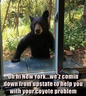 oh hi New York...we'z comin down from upstate to help you with your coyote problem