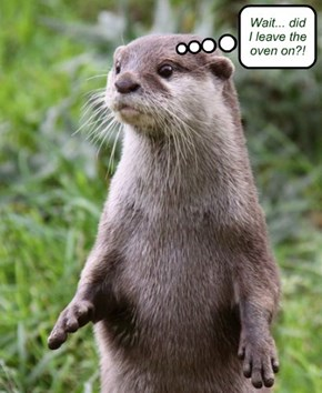 It's a 50-50 chance: this happens for every otter vacation I go on...