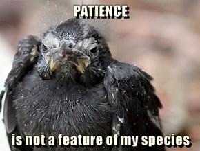 PATIENCE  is not a feature of my species