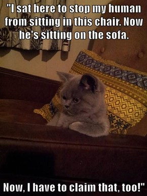 """""""I sat here to stop my human from sitting in this chair. Now he's sitting on the sofa.  Now, I have to claim that, too!"""""""