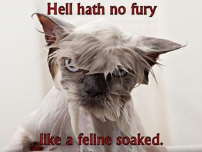 Hell hath no fury  like a feline soaked.
