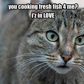 the road to your cat's heart