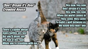 """""""Don't Dream It's Over"""" : Crowded House"""