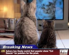 """Breaking News - Sahara has Dooby watch that popular show """"Cat Dancin"""" for pointers for the prom."""