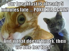 """""""Our breakfast is already 5 minutes late ... POKE HER AGAIN!  And if that doesn't work, then we bite her toes!"""""""