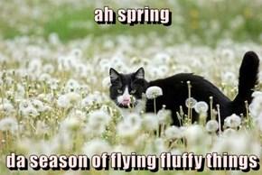 ah spring  da season of flying fluffy things