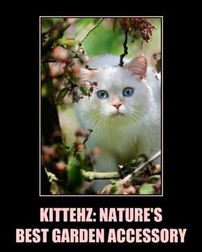 KITTEHZ: NATURE'S BEST GARDEN ACCESSORY