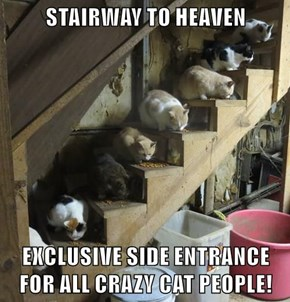 STAIRWAY TO HEAVEN  EXCLUSIVE SIDE ENTRANCE FOR ALL CRAZY CAT PEOPLE!