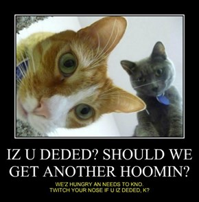 IZ U DEDED? SHOULD WE GET ANOTHER HOOMIN?