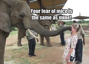 Elephant mind meld.