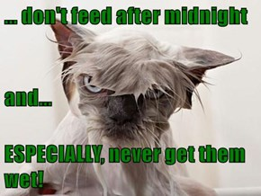 ... don't feed after midnight and... ESPECIALLY, never get them wet!