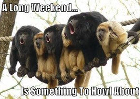 A Long Weekend...  Is Something To Howl About