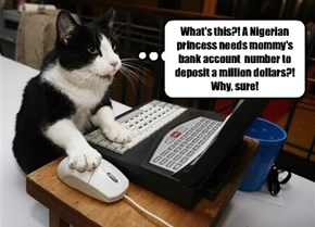 I never should have let my cat use my debit card.