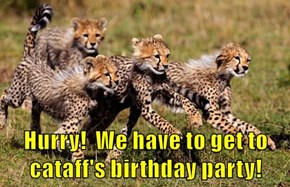 Hurry!  We have to get to cataff's birthday party!