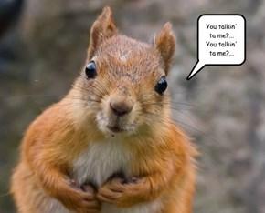 De Squirrelo