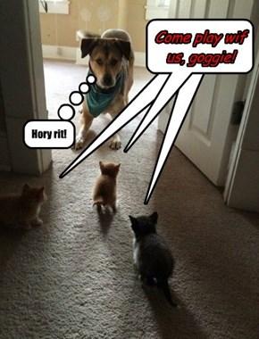 Heeeeeer's kittehs!