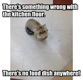 There's something wrong with the kitchen floor.        There's no food dish anywhere!
