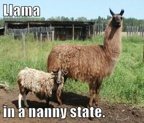 Llama  in a nanny state.