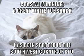 COASTAL WARNING:                                              A GREAT WHITE TOE SHARK  HAS BEEN SPOTTED IN THE SOUTHWEST CORNER OF BED.