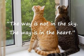 """The way is not in the sky. The way is in the heart."""