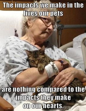 The impacts we make in the lives our pets  are nothing compared to the impacts they make                                         on our hearts.