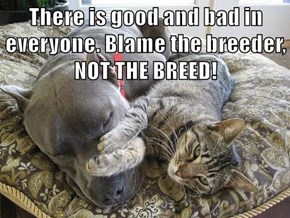 There is good and bad in everyone. Blame the breeder, NOT THE BREED!