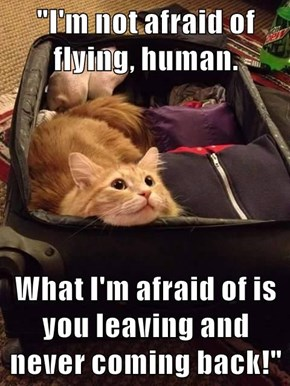 """I'm not afraid of flying, human.  What I'm afraid of is you leaving and never coming back!"""