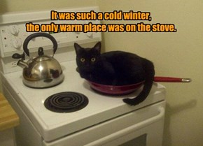 It was such a cold winter,  the only warm place was on the stove.
