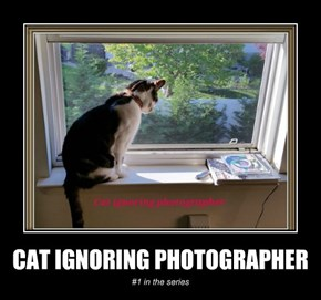 CAT IGNORING PHOTOGRAPHER