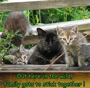 Feral family getting aquainted w. humans