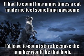If had to count how many times a cat made me feel something pawsome  I'd have to count stars because the number would be that high.