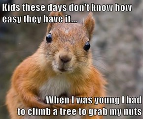 Kids these days don't know how easy they have it...  When I was young I had                                   to climb a tree to grab my nuts