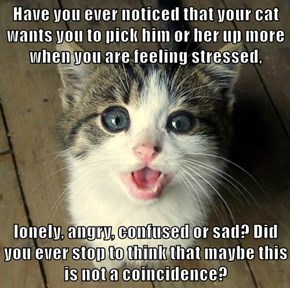 Have you ever noticed that your cat wants you to pick him or her up more when you are feeling stressed,  lonely, angry, confused or sad? Did you ever stop to think that maybe this is not a coincidence?