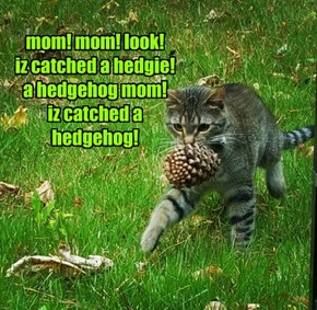 mom! mom! look! iz catched a hedgie! a hedgehog mom! iz catched a hedgehog!