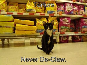 Torture   Never De-Claw.