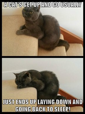 A CAT'S GET UP AND GO USUALLY  JUST ENDS UP LAYING DOWN AND GOING BACK TO SLEEP!