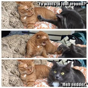 """""""Yu wants to fool around?""""  """"Meh nedder."""""""
