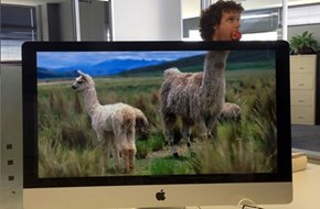 This Office Is a Zoo