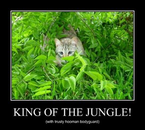 KING OF THE JUNGLE!